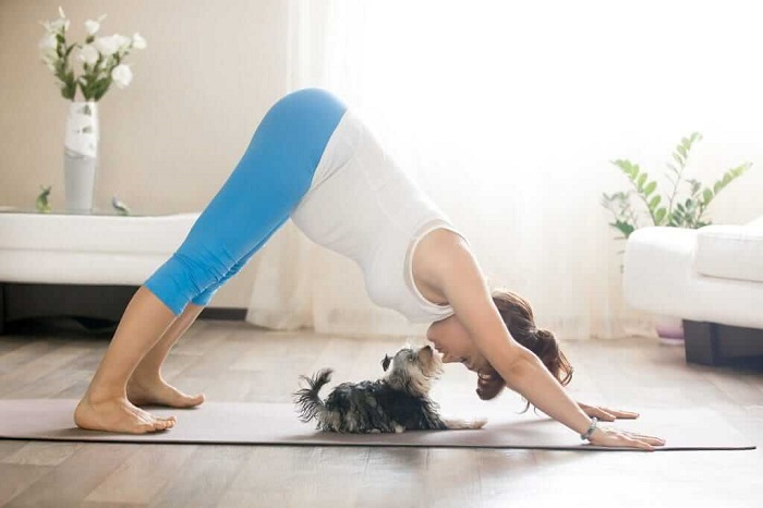 doga dog joga fitness with your pet 1024x683
