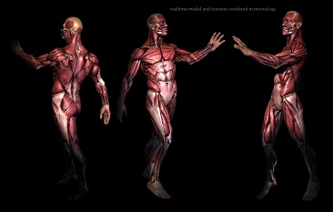 real time anatomy by mojette-d4xdz6q
